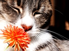 Cats take time to smell flowers too...