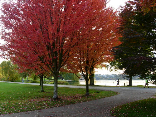 Autumn at Green Lake