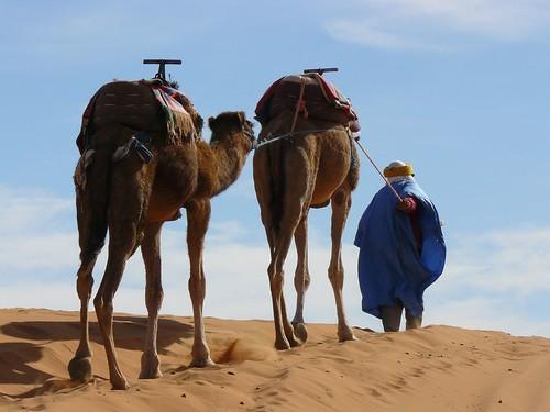 Camellos en el desierto (Merzouga, Marruecos) por ti.
