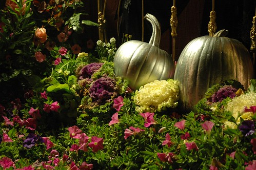 Cinderella's Silver Halloween PUMPKINS in a Bed of Pink Flowers and decorative cabbage, Roses, brass bed frame, Mill Rose Inn, Half Moon Bay, California, USA
