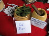 IMG_0091 (tundrasnow) Tags: peru amazon market jungle iquitos loreto belen mapacho