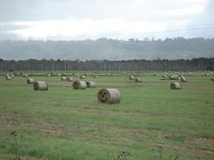 Happy Hay