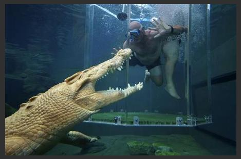 Swimming with saltwater crocs