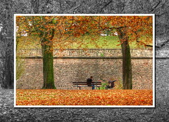 Dad in the park (Mike G. K.) Tags: park autumn trees bw orange france brick fall grass leaves bench dad foliage strasbourg explore alsace frame walls frontpage hdr photomatix strolley tonemapped tonemapping explored theunforgettablepictures hdrvillage