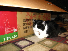 Josie and the Christmas tree box