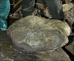 biggest ever stegosaurus footprint found