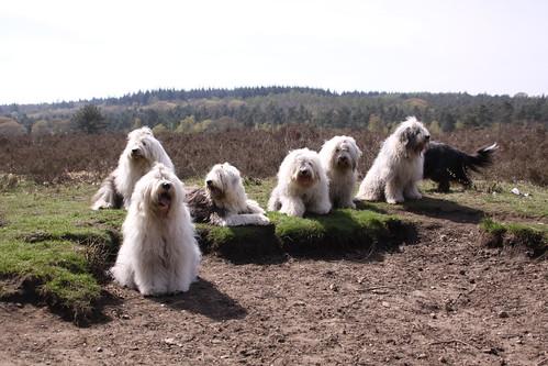 Hondenbos April 2010