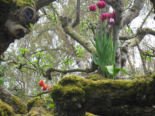 Tulips growing on the branches of a bare-branched tree