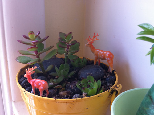 my other little succulent garden + reindeer