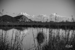 Lago Massaciuccoli (Simone Vanelli) Tags: lake lago shift tuscany toscana tilt massaciuccoli