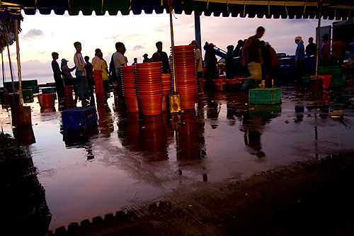 Unloading fish at Na Thon, Ko Samui's main pier.