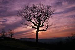 Sunset (MNesterpics) Tags: 2008 snp skylinedrive nature shenandoahnationalpark winter sunset sun clouds sky va virginia thebest anawesomeshot mountains