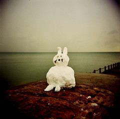snow rabbit (microabi) Tags: uk snow cold rabbit beach sussex holga brighton freezing brightonflickr2009bookpick
