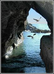 Natural frame (Nespyxel) Tags: sea cliff seagulls seascape nature rock mare arch seagull liguria natura frame cinqueterre vernazza roccia arco gabbiani gabbiano seaview cornice naturalframe scogliera 5terre bigmomma naturalarch supershot golddragon challengeyouwinner platinumphoto diamondclassphotographer theunforgettablepictures nespyxel stefanoscarselli