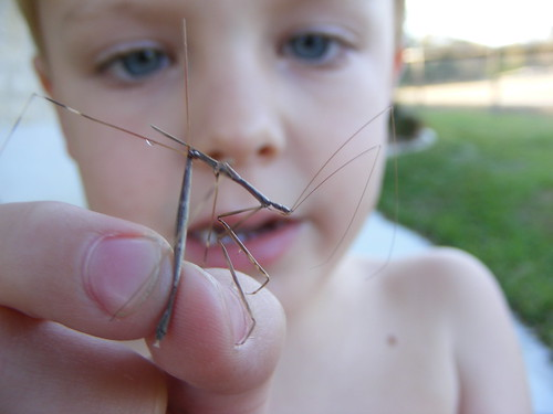 Travis and stick bug