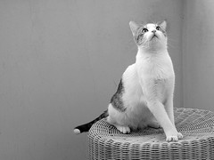How To Be A Cat. (~ielle~ ilarialuciani.com) Tags: blackandwhite bw pet look animal cat iaia bn sguardo ila mybest gatto animali biancoenero briciola bestofcats ilarialuciani howtobeacat comeessereungatto