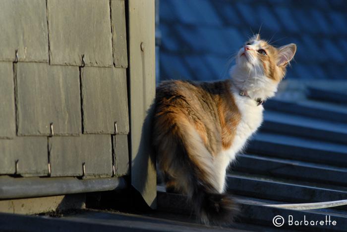 cat's-commando
