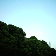 【写真】ミニデジで撮影した浜離宮恩賜庭園を取り囲む木々