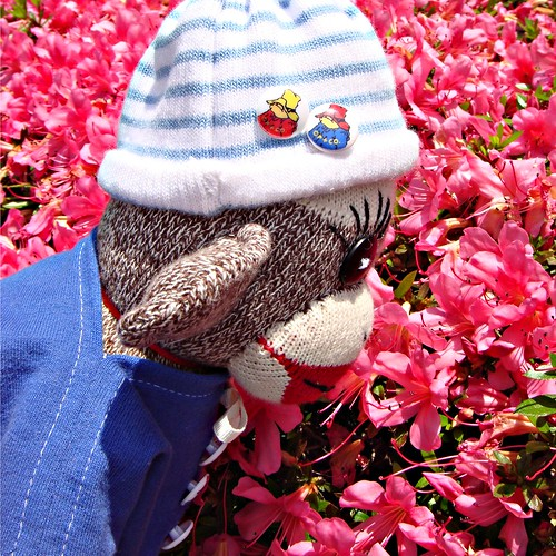 Ken is a boy sock monkey who likes to look at the pretty flower blossoms, too! (by martian cat)