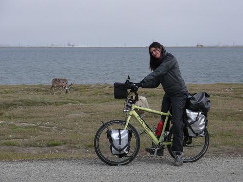 Primer dia de bici en Deadhorse Alaska con los caribus en la ruta