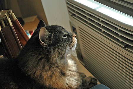 The Thanksgiving Advent Calendar Day Two Air Conditioning Whatever