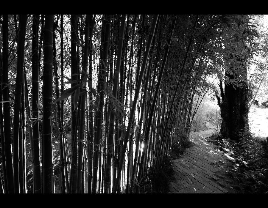 canavial e árvore