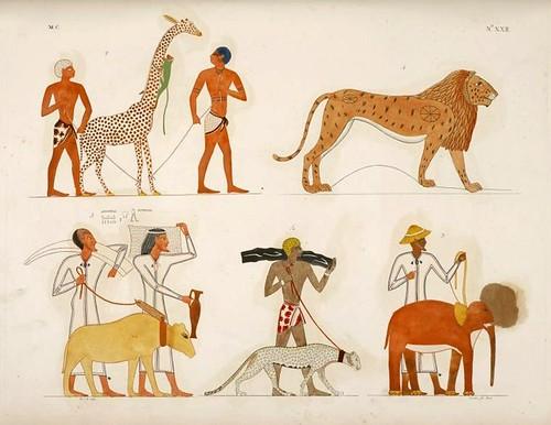 08- Varias especies de animales cuadrupedos