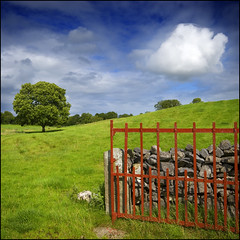 RGB (Tony Murphy) Tags: ireland field meadow rgb horsechestnut boyle n4 redgate lonelycloud redandgreen roscommon irishlandscape redgreenandblue beautifulireland discoverireland