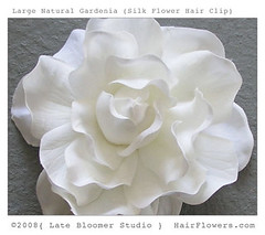 Gardenia_Hair_Flower_Natural (hairflowers.com) Tags: wedding vacation orchid flower beach rose hair honeymoon silk clip tropical bridal gardenia flowerhairclip flowerforhair bridalflowerhairclip weddingflowerhair gardeniaflowerforhair