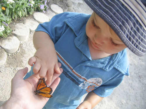 touching the butterfly