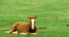 Spring again (Patrícia Nuñez) Tags: horse farm cavalo fazenda foal potrinho