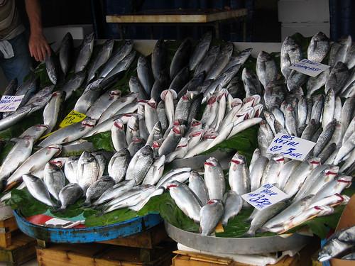 Galata Fish Market