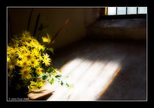Floral Light