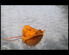 autumn, left on the table (Dreamer7112) Tags: autumn macro reflection fall reflections table schweiz switzerland leaf nikon europe suisse suiza aarau autumncolours autumncolors explore fourseasons simplicity suíça svizzera aargau 4seasons autumncolor d300 autumncolour dreamer7112 nikond300 autmnleftonthetable