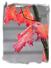 Autumn Blaze (LIBRRIAN) Tags: fdsflickrtoys naturesfinest blueribbonwinner supershot bej platinumphoto anawesomeshot theperfectphotographer natureselegantshots panoramafotográfico