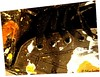 Fiesta. (Felipe Smides) Tags: chile macro art texture textura work trabajo paint arte estilo stile felipe texturas pintor pintura zapatilla manchas artisticexpression tilla instantfave mywinners abigfave aplusphoto beatifulcapture artlegacy smides fotografiasmides funfanphotos felipesmides
