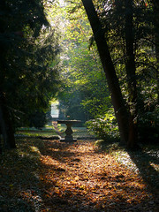 The Secret Garden (_annalaura_) Tags: park autumn friends light parco nature leaves foglie wow garden leaf secret natura sensational foglia fabulous autunno soe luce giardino segreto blueribbonwinner golddragon mywinners abigfave impressedbeauty favoritegarden eliteimages thisisexcellent goldstaraward natureselegantshots rubyphotographer jediphotographer dragondaggerphoto thecelebrationoflife
