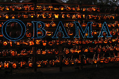 Pumpkin wall at night (Doxieone) Tags: orange fall halloween wall pumpkin carved elizabeth charlotte president pumpkins northcarolina carolina 2008 democrats obama 752110208 pumpkinwallset2008 halloweenfall2008set