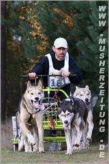 Husky-Welmeister-Team aus Belgien - Joel Reyniers