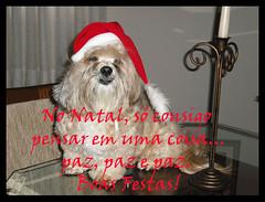 LINDA..... (nanarteira) Tags: pet animal natal de lhasa estimação mensagem