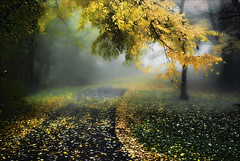 Under the Yellow Umbrella:-) (mysza831) Tags: autumn fall fog treebranch fallenleaves pathinapark