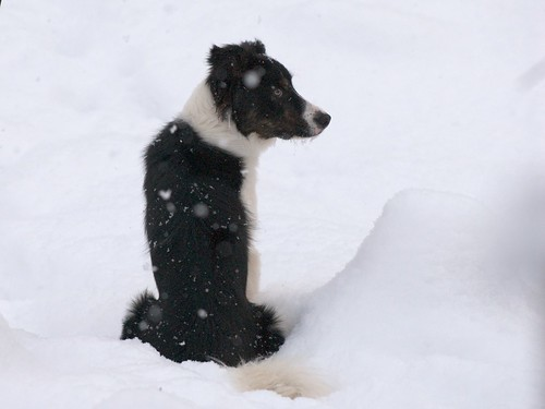 Tucker our Border Collie
