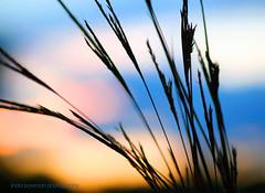 Ingenius design (lynne_b) Tags: park light sunset sky sun nature grass silhouette clouds forest evening illinois archives heavens preserve settingsun naturesfinest interestingness94 explored impressedbeauty