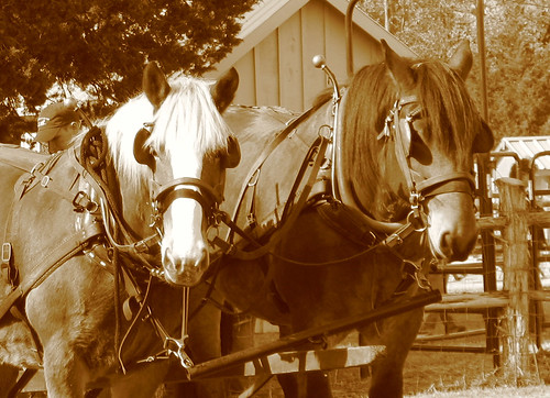 homesteadhorse sepia