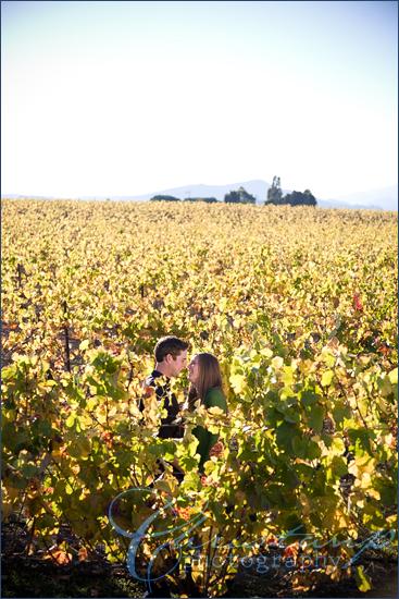 Tolosa Winery vineyard by ChristanP Photography