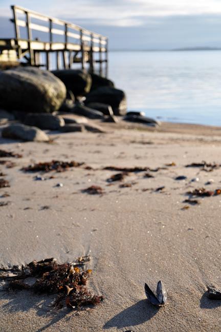 Musselstranden