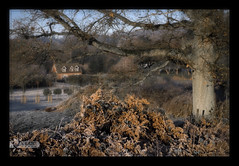 One frosty morning (kerto.co.uk) Tags: artistictreasurechest