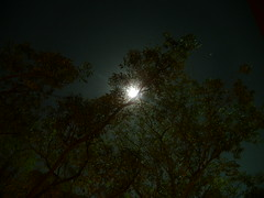 destellos de luna II (gabrielmotavita) Tags: noche arboles luna gmt obscur