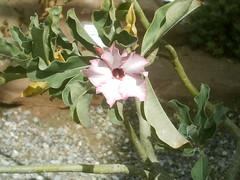 IMAG0014 (Ian Faz) Tags: flowers plants tress nessgardens
