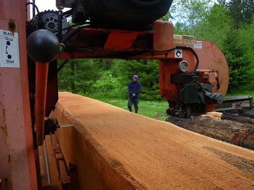 cutting cedar